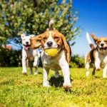Off-Leash Dog Parks in Livermore, CA